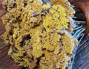 Dried Yellow Yarrow