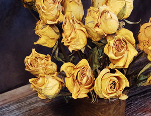 Dried Yellow Roses