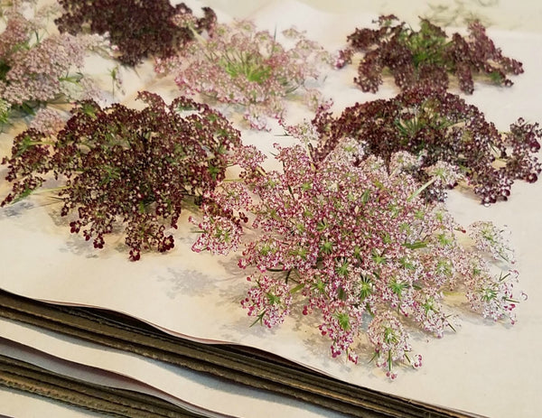 Most Popular Dried Florals