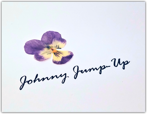 Pressed Johnny Jump Up's
