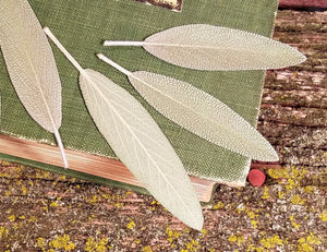 Pressed Garden Sage Leaves