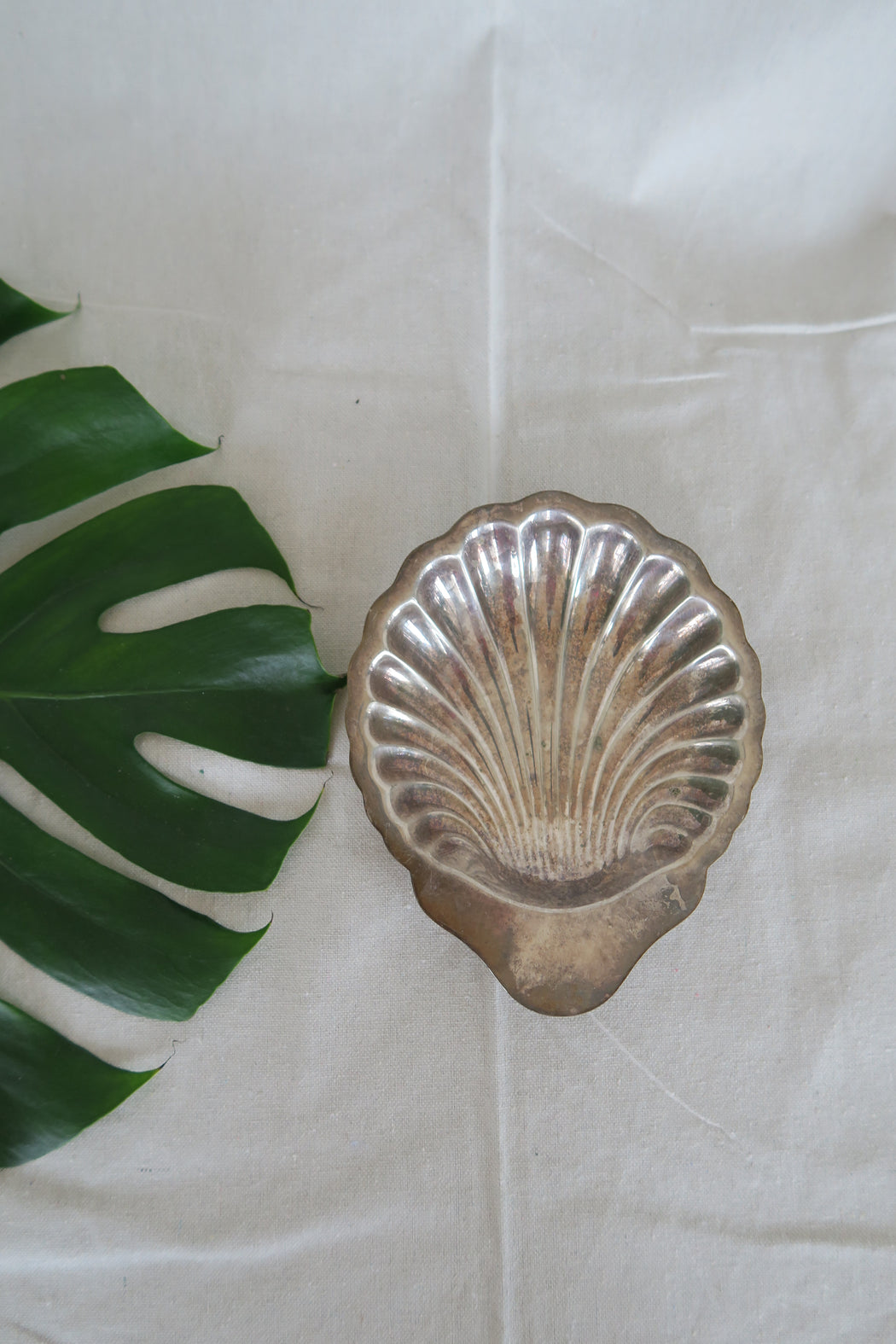 Antique Shell Dish