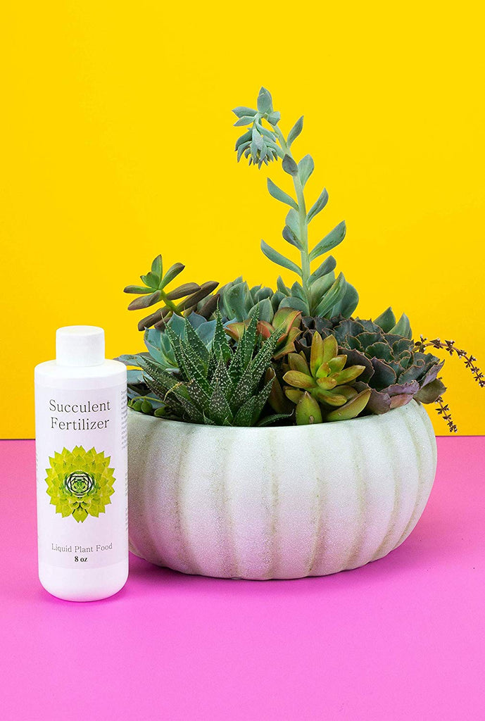 Succulent Fertilizer | Formulated Succulent Food for Potted Indoor Succulents and Cactus | Plant Food for Succulent Soil in Pots (UPC 810024700295)