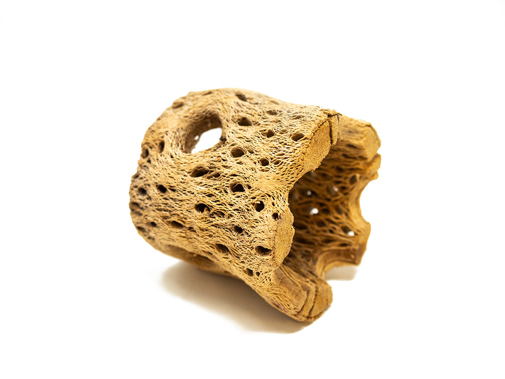 Teddy Bear Cholla Wood - Deluxe Pieces!