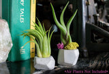 Tillandsia Air Plant Food | Fertilizer Kit with Spray Bottle and Mister | Encourages Air Plants to Bloom with Formulated Nutrients (UPC 703624431006)