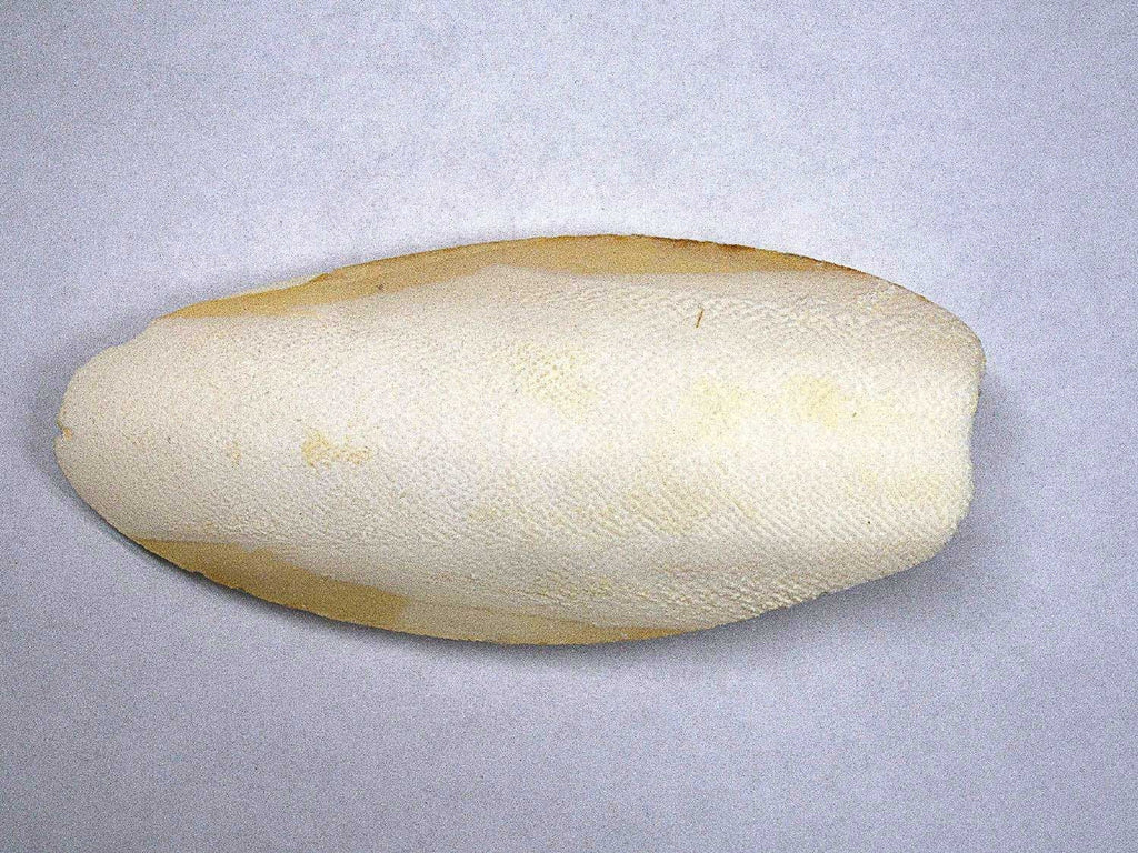 Cuttlebone (Natural Mineral Supplement)
