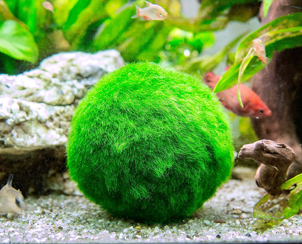 Marimo Moss Ball Fertilizer Food