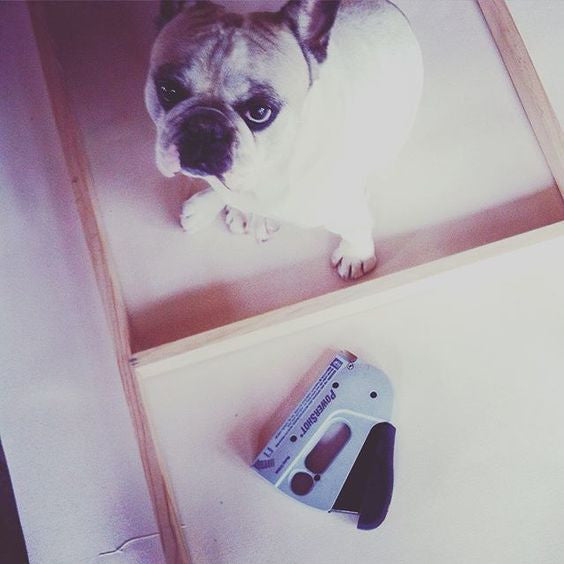 Olive our frenchie is always at help