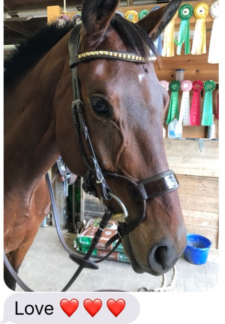 Eventing Rider Kristen Rozycki gives our new P.S. of Sweden bridles a rave review!