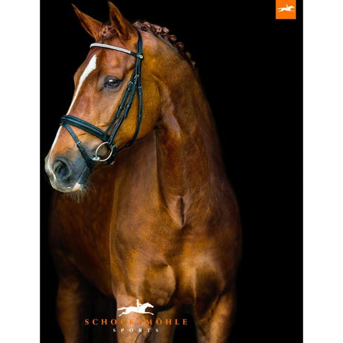 Schockemohle Falsterbo  Bridle & Reins