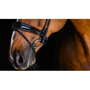 PS of Sweden All In Bridle