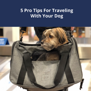 5 Pro Tips When Traveling With Your Dog