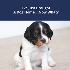 I Just Brought Home A Dog....Now What?