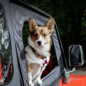 9 Things You Should Pack for a Safe and Fun Roadtrip With Your Dog