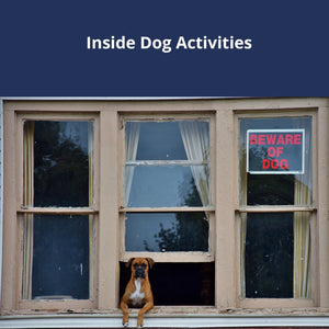 Inside Dog Activties