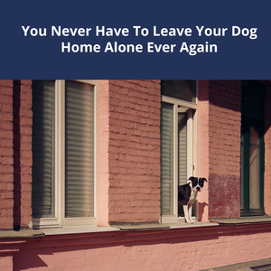 You Never Have To Leave Your Dog Home Alone Ever Again