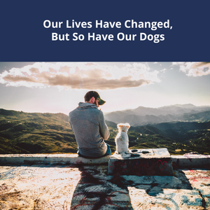 Our Lives Have Changed, But So Have Our Dogs