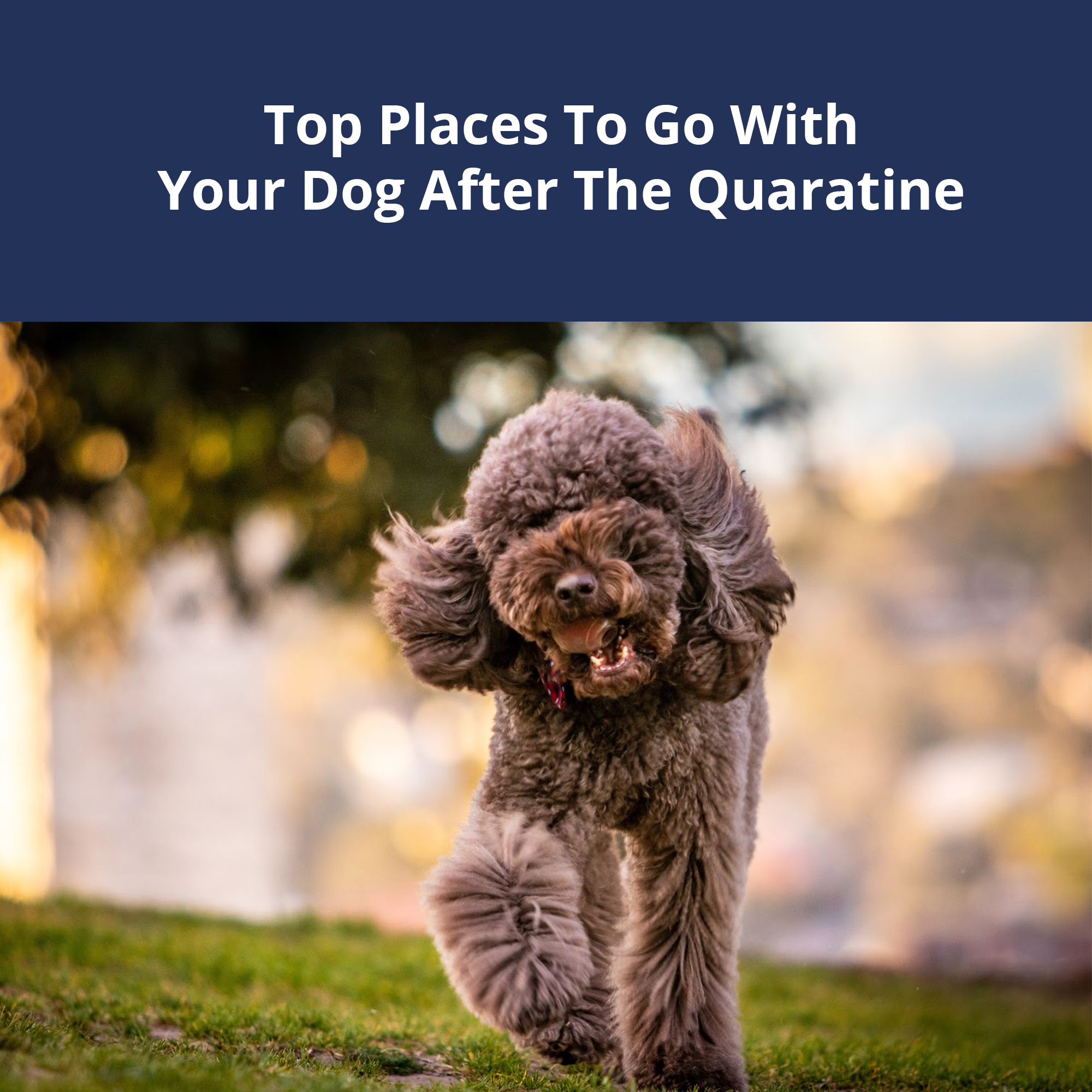 Top Places To Go With Your Dog After The Quarantine