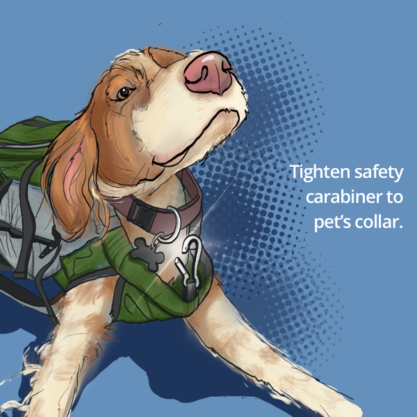 A happy dog lifts its head to reveal a shiny collar clip for safety