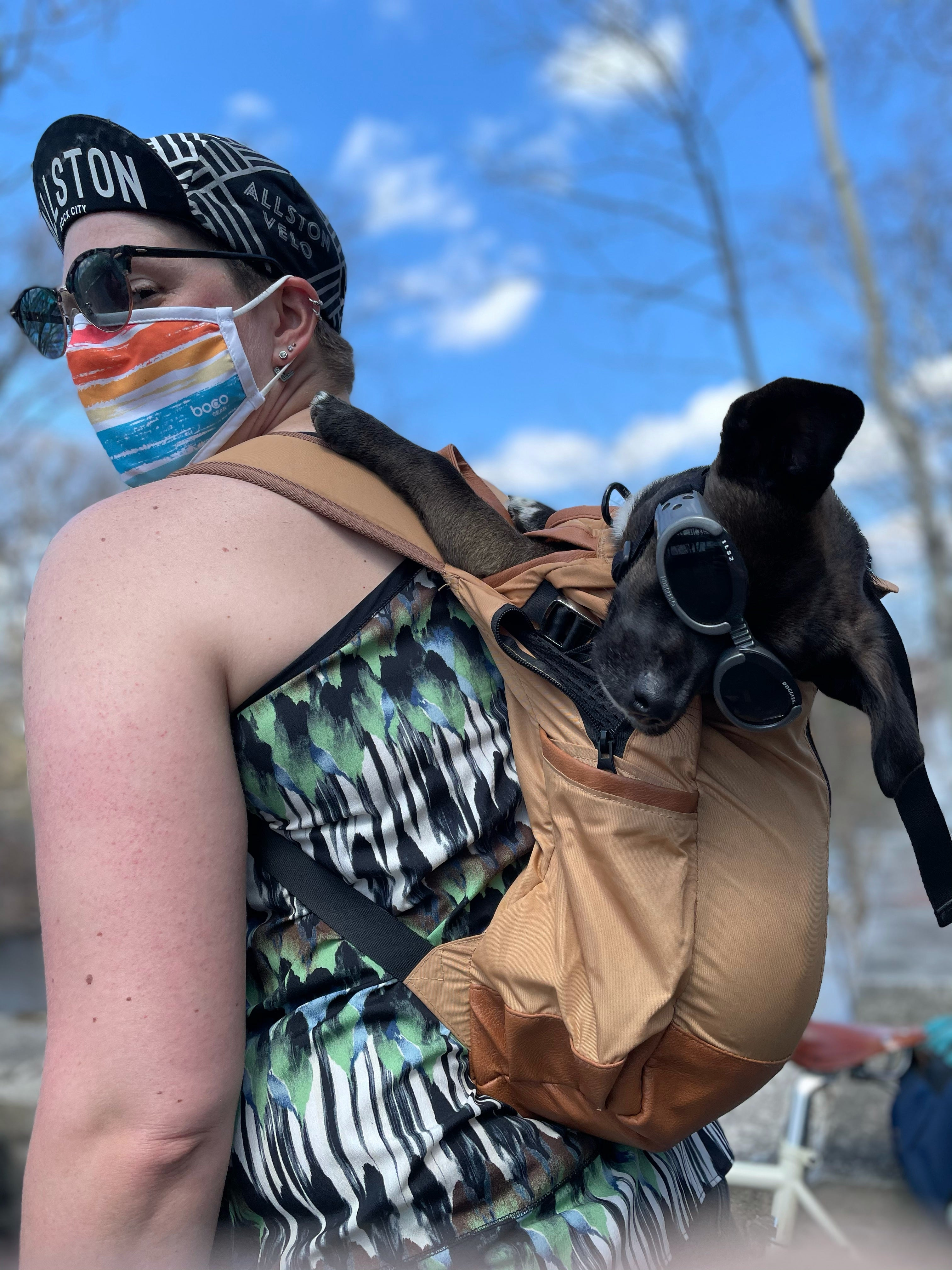 Watson chills in his owners K9 sport sack backpack carrier