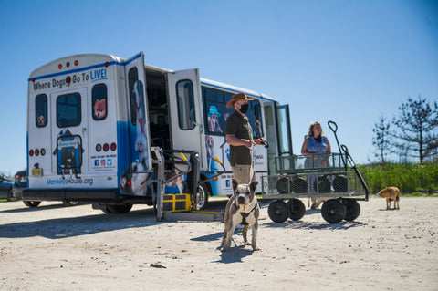 Waggin' One, the bus for hospice dogs is parked on the sandy beach of the Jersey Shore.