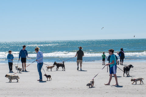 Many owners and their dogs on leashes walk and play along the beach