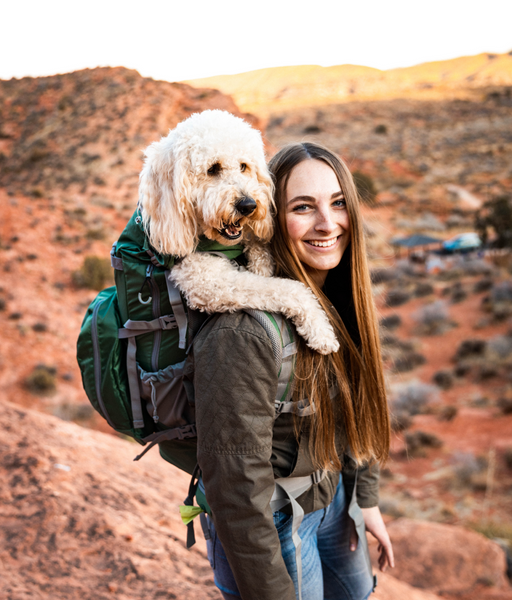 A golden doodle getting a break from a hike by riding in a K9 Sport Sack backpack carrier