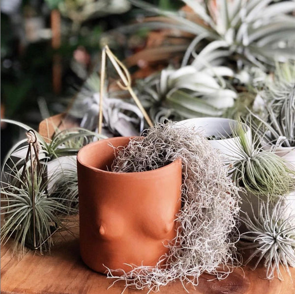 GroupPartner Terracotta Tops Planter Pots Air Plants Editorial