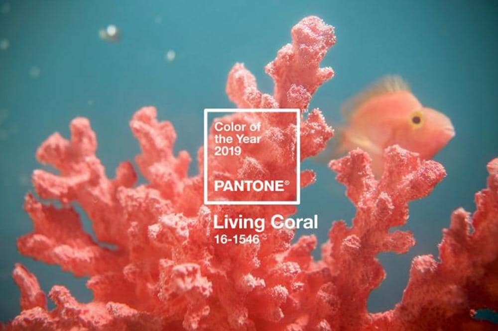 'Living Coral' is the colour of 2019