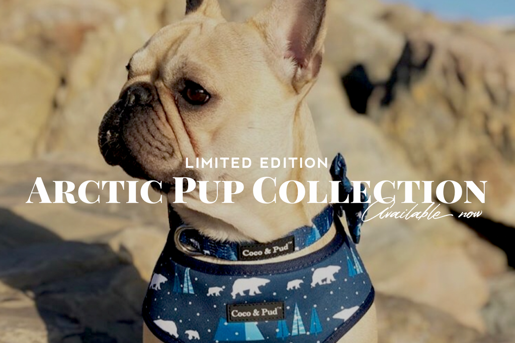 ARCTIC PUP COLLECTION - LIMITED EDITION