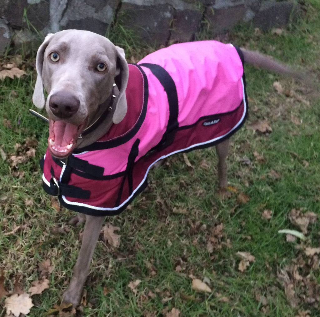 Waterproof Dog Coat 3022 - Red/ Pink