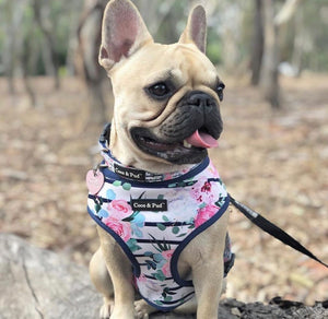 Coco & Pud Floral Blooms Reversible Dog harness