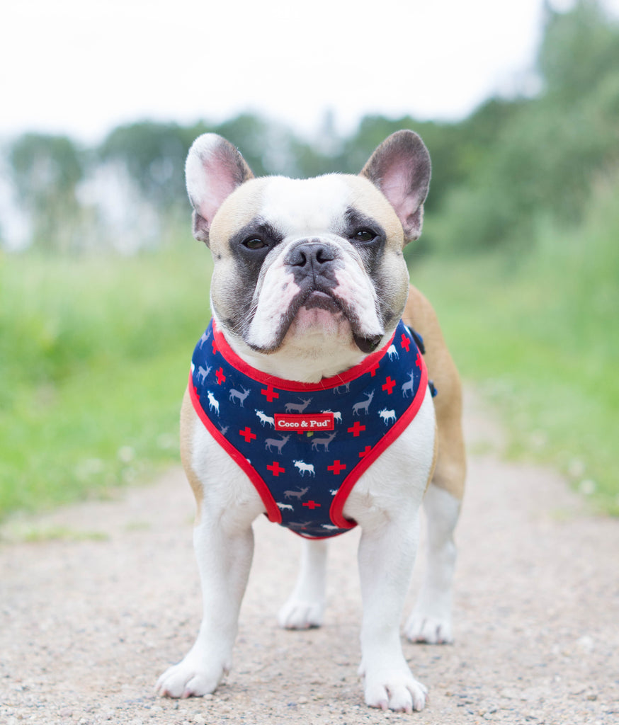 Coco & Pud Adventure Reversible Dog Harness