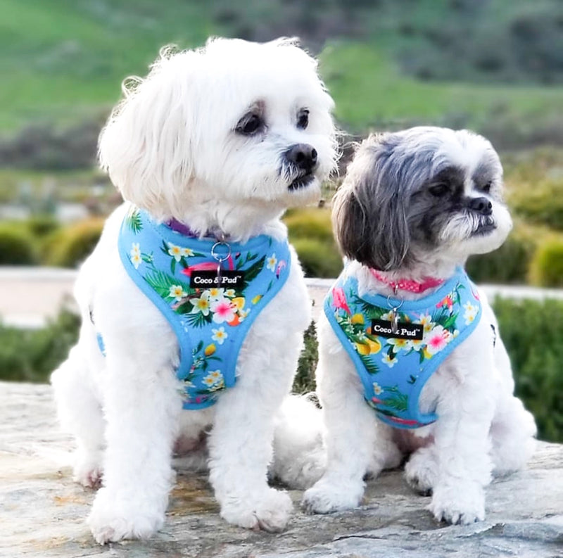Coco & Pud Flamingo Tropical Dog Harness - Coco & Pud