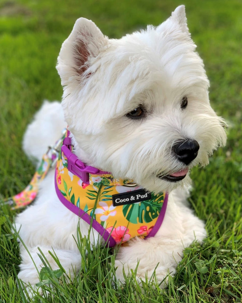 Coco & Pud Summer Sunrise Designer Dog harness Australia