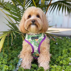 Coco & Pud Summer Sunrise Reversible Dog Harness Australia