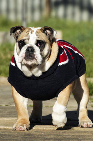 Coco & Pud Union Jack Dog Sweater - Coco & Pud