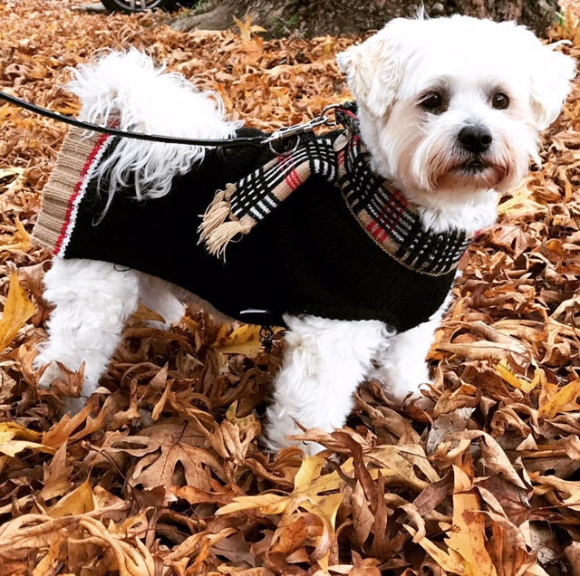 Chelsea Dog Sweater - Coco & Pud