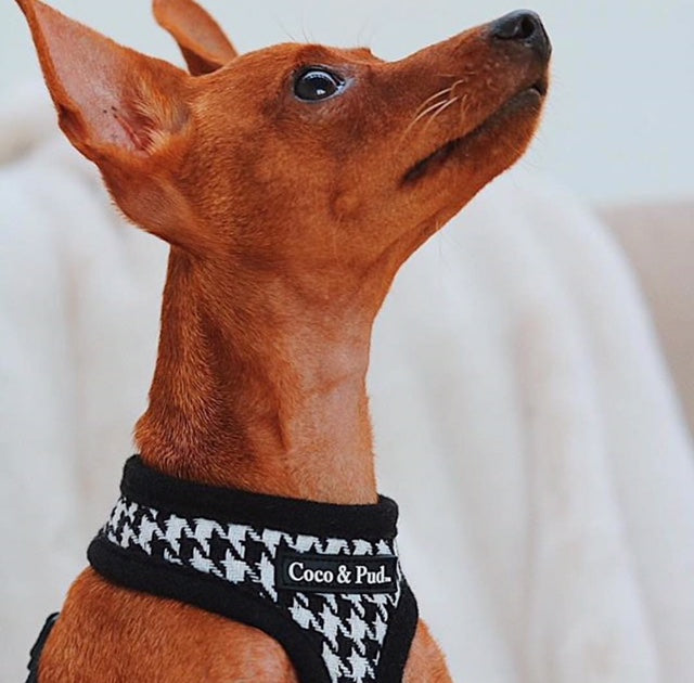 Houndstooth Dog Harness - Black & White