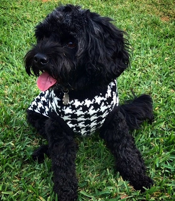 Houndstooth Dog Sweater -Black/ White