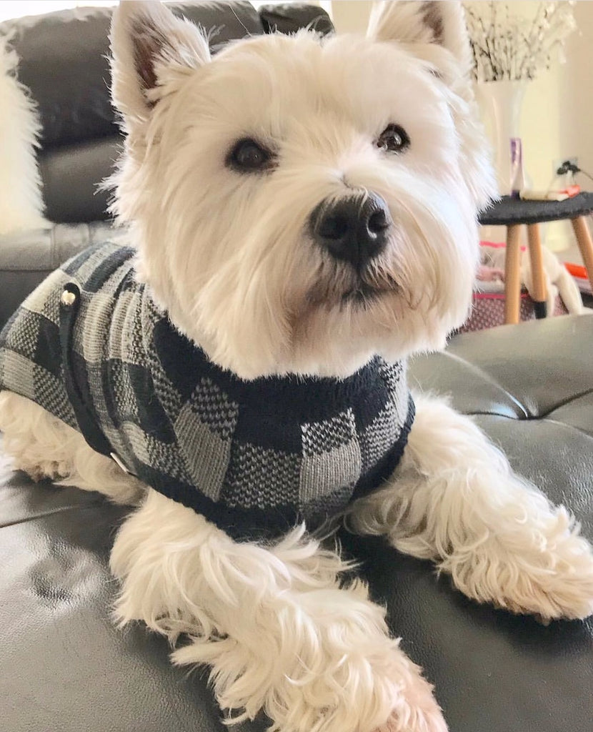 Coco & Pud Boston Wool Dog Sweater