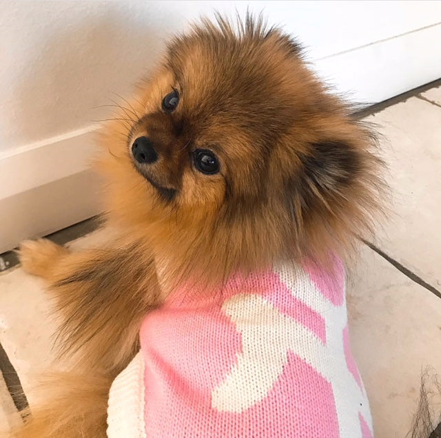 New York Dog Sweater - Pink