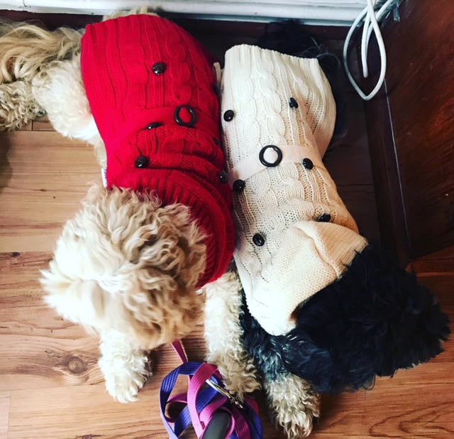 Coco & Pud Paris Dog Sweaters