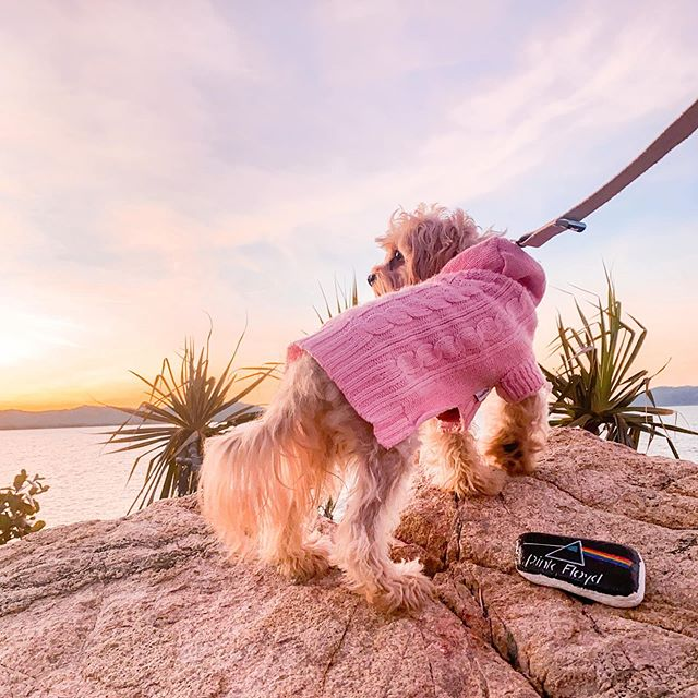 Coco & Pud Edinburgh Pet Sweater Pink