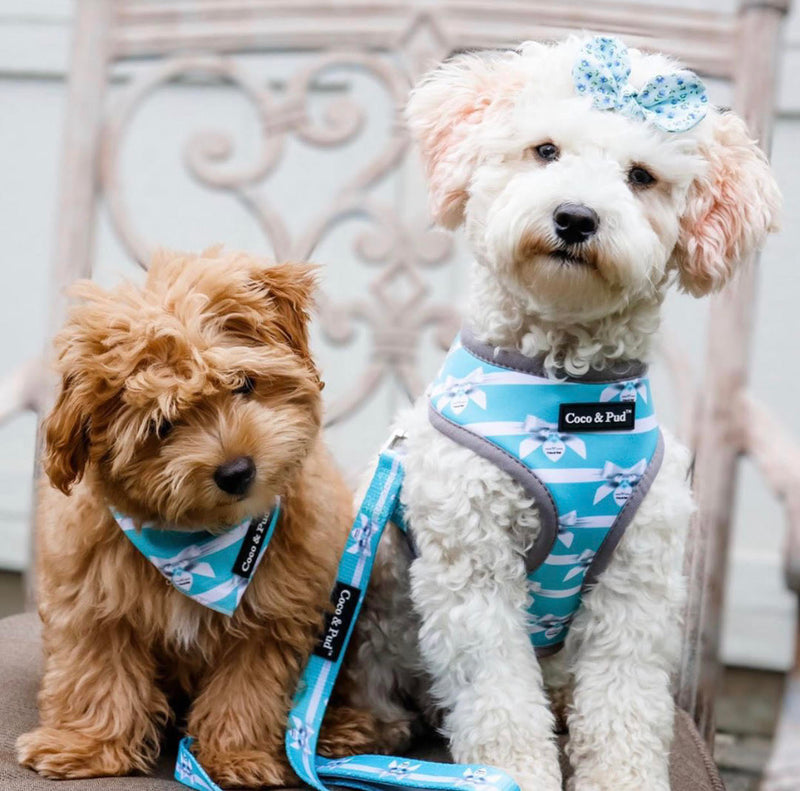 Coco & Pud Audrey Dog Harness