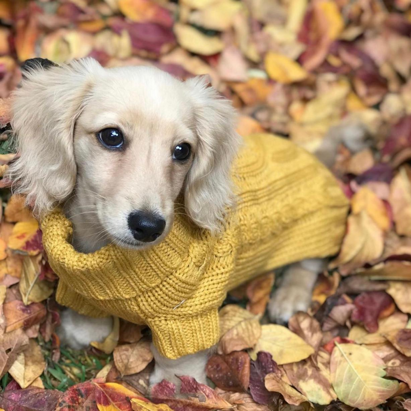 Coco & Pud Coco Cable Pet Sweater Mustard