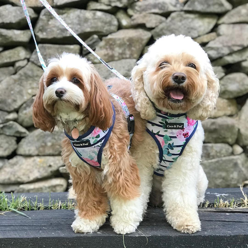 Coco & Pud Floral Blooms Dog Harness