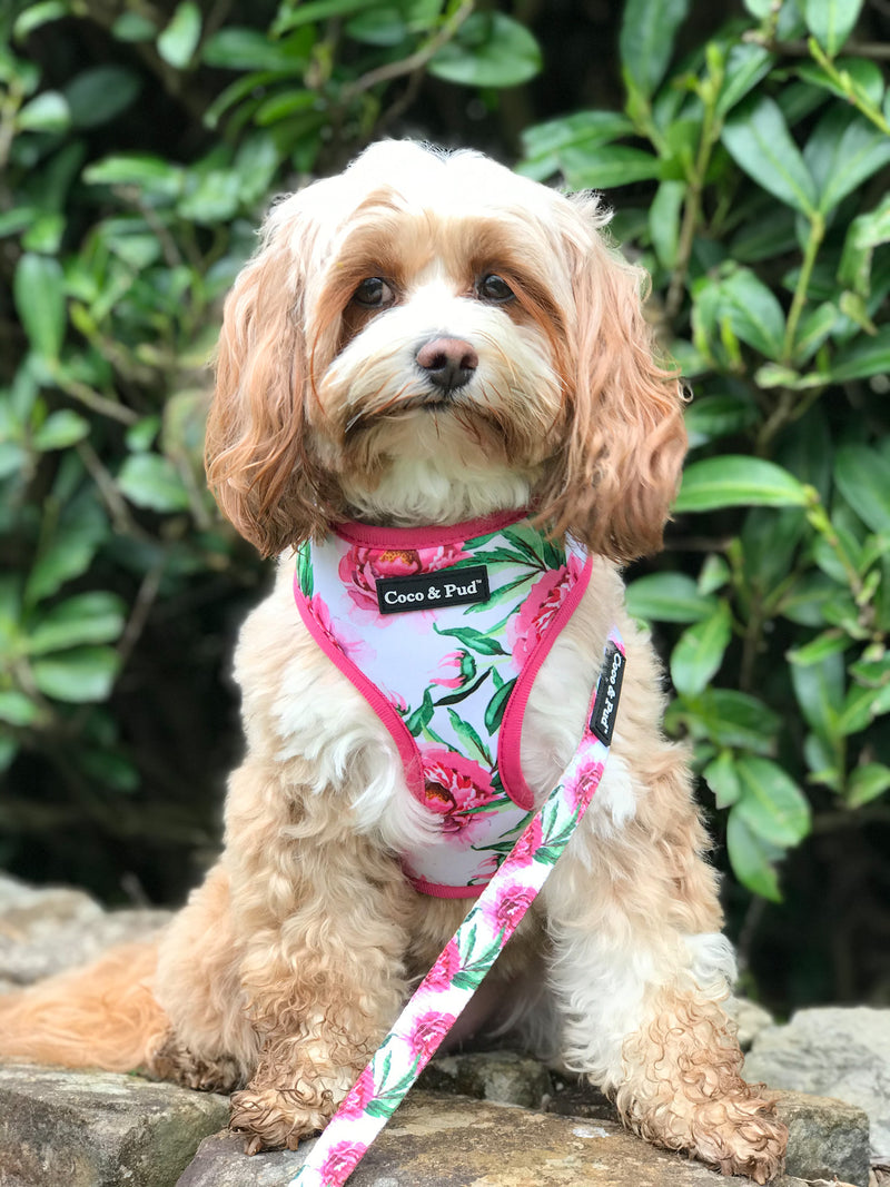 Maisie in Coco & Pud Peony Reversible Dog Harness