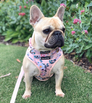Coco & Pud Provence Rose Dog Harness & Frenchie Daisy
