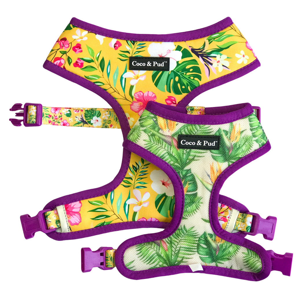 Coco & Pud Summer Sunrise Dog Harness